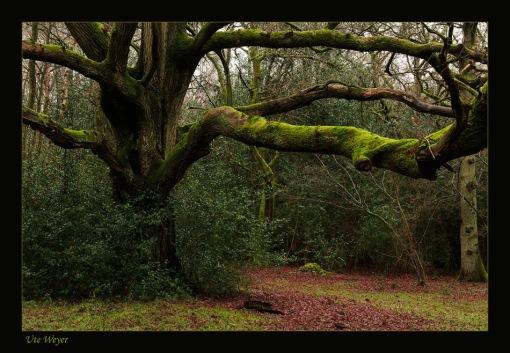 5986fm-tree